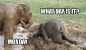 funny animal elephant lol meme pic picture