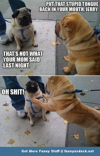 pug funny pic picture lol dog animal