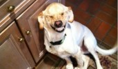 funny dog lol animal pic picture