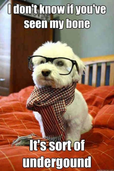 hipster dog funny pic picture lol meme animal