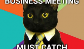 lolcat cat animal funny pic picture lol meme business