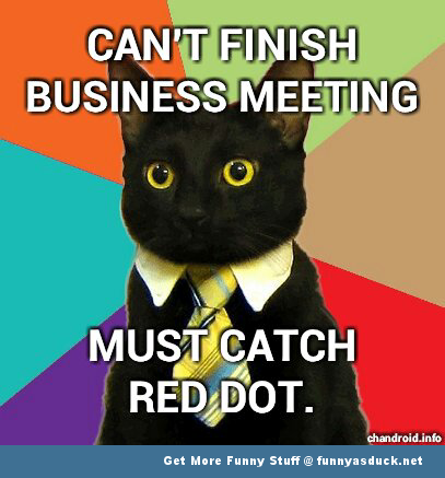 business cat