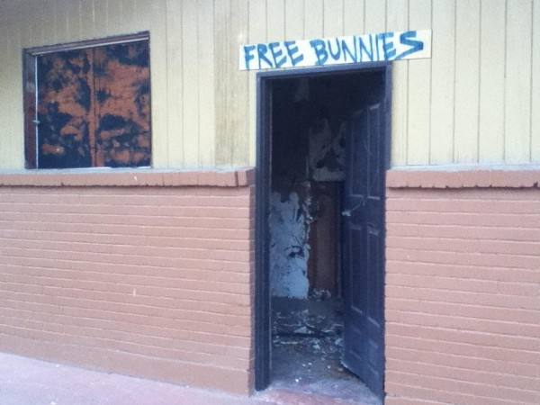 seems legit free bunnies funny pic picture lol