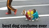 funny lol pic picture animal dog costume meme