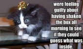 funny pic picture lol lolcat animal cat meme