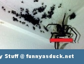 spider animal insect boss gaming funny pic picture lol