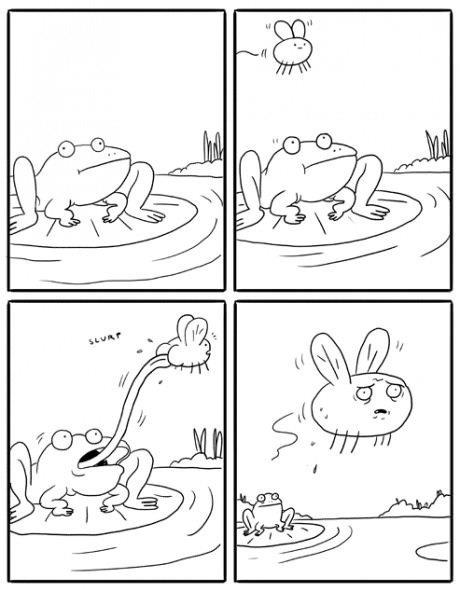funny lol pic picture fly frog animal comic