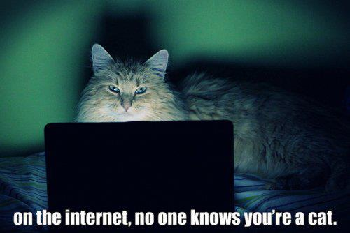 lolcat cat animal funny pic picture lol laptop internet meme