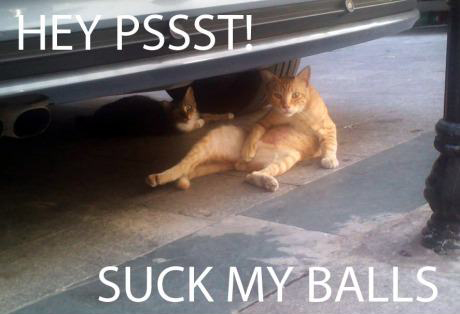 cat lol lolcat meme funny pic pictures lol