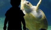 come at me bro meme animal turtle funny pic picture lol