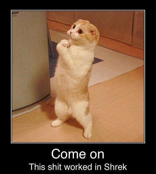 funny pics pictures pic picture image photo images photos lol cat lolcat meme animal shrek puss