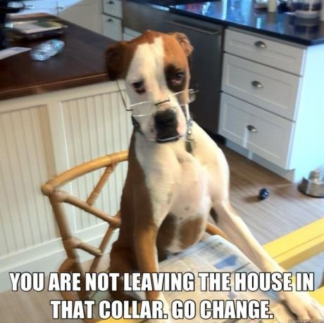 dog dad animal meme memes funny pics pictures pic picture image photo images photos lol