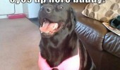 dog animal animals bra funny pics pictures pic picture image photo images photos lol meme memes