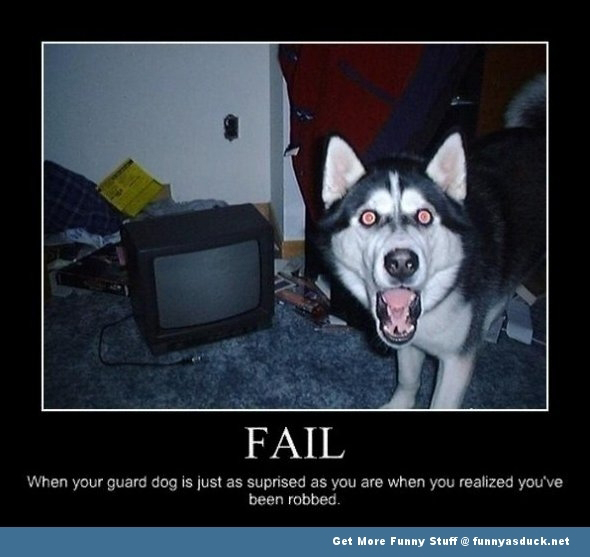 funny pic picture lol fail dog animal