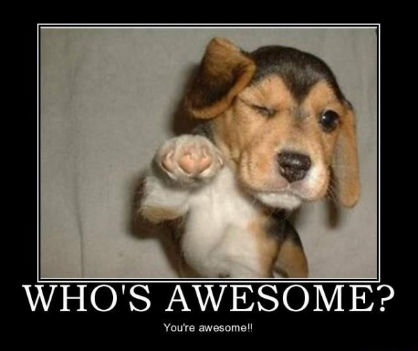 dog awesome animal meme funny pics pictures pic picture image photo images photos lol