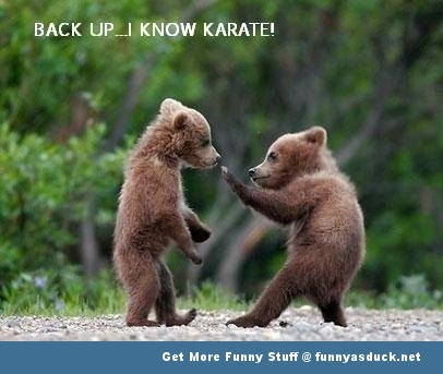 animal bear karate meme funny pics pictures pic picture image photo images photos lol