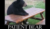meme funny pics pictures pic picture image photo images photos lol animal bear