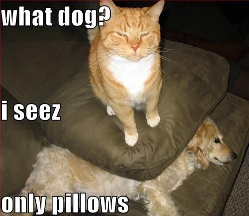 funny pic picture lol cat dog lolcat animal meme