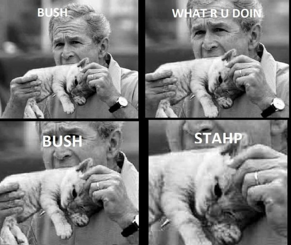 george bush stahp cat animal funny pics pictures pic picture image photo images photos lol