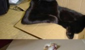 cat lolcat animal box funny pics pictures pic picture image photo images photos lol