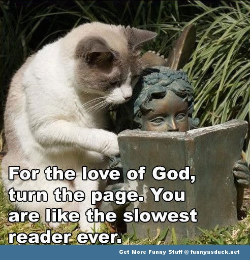 cat lolcat animal angel funny pics pictures pic picture image photo images photos lol meme
