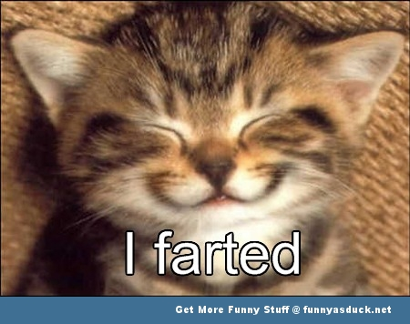 lolcat cat kitten animal meme funny pics pictures pic picture image photo images photos lol