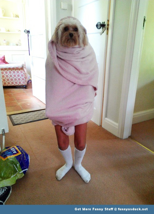 funny pics pictures pic picture image photo images photos lol dog animal shower towel