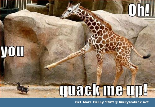 duck giraffe animal meme funny pics pictures pic picture image photo images photos lol