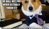 lawyer dog meme fraud case animal funny pics pictures pic picture image photo images photos lol