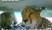 how was school leopard in car funny pics pictures pic picture image photo images photos lol