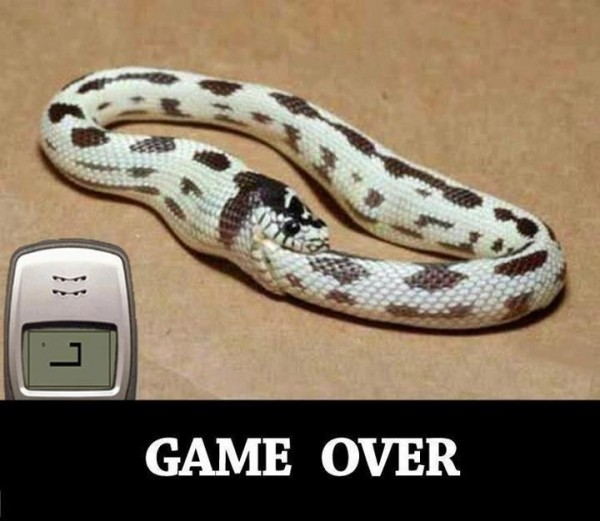 nokia snake mobile phone meme funny pics pictures pic picture image photo images photos lol