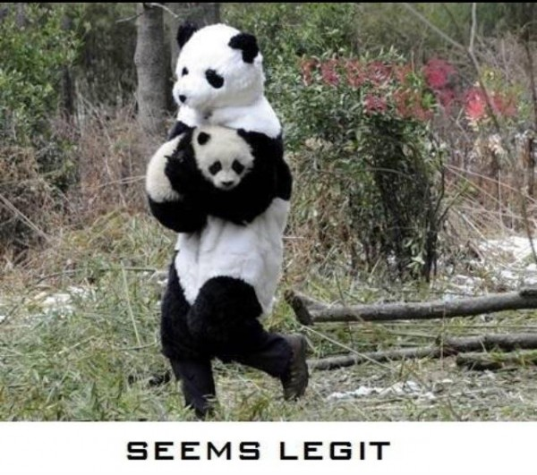 panda animal kidnap seems legit animal funny pics pictures pic picture image photo images photos lol