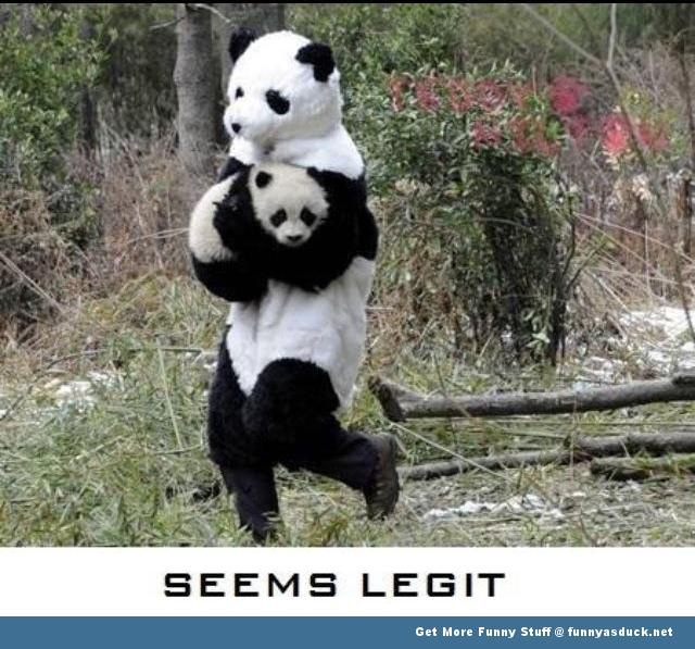 Legit Panda Kidnap