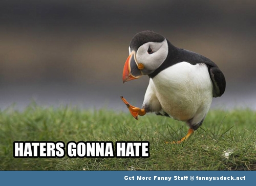 Penguin animal meme haters gonna hate funny pics pictures pic picture image photo images photos lol