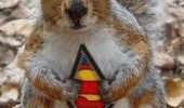 superman squirrel meme animal funny pics pictures pic picture image photo images photos lol