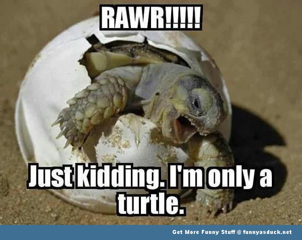 turtle egg animal meme funny pics pictures pic picture image photo images photos lol