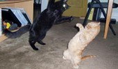 cats fighting lolcat animal fight funny pics pictures pic picture image photo images photos lol