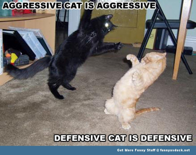 Cats fighting lolcat animal fight funny pics pictures pic picture