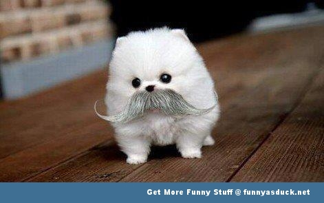 dog puppy like a sir animal funny pics pictures pic picture image photo images photos lol