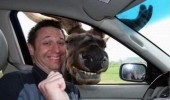 moose animal photo bomb funny pics pictures pic picture image photo images photos lol