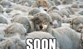 animals sheep wolf soon funny pics pictures pic picture image photo images photos lol