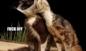 lolcat cat animal funny pic picture lol meme