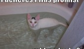funny lol pic picture cat lolcat animal meme