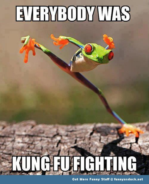 kung fu frog animal animals memes  funny pics pictures pic picture image photo images photos lol