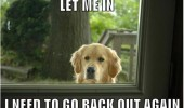 funny pics pictures pic picture image photo images photos lol meme dog animal