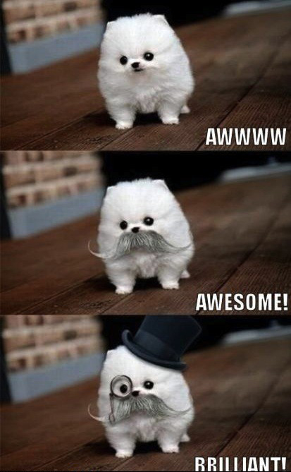 like a sir dog puppy animal meme funny pic picture lol