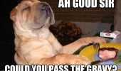 like a sir dog animal funny pics pictures pic picture image photo images photos lol meme
