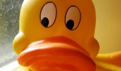 funny lol pic picture not bad rubber duck