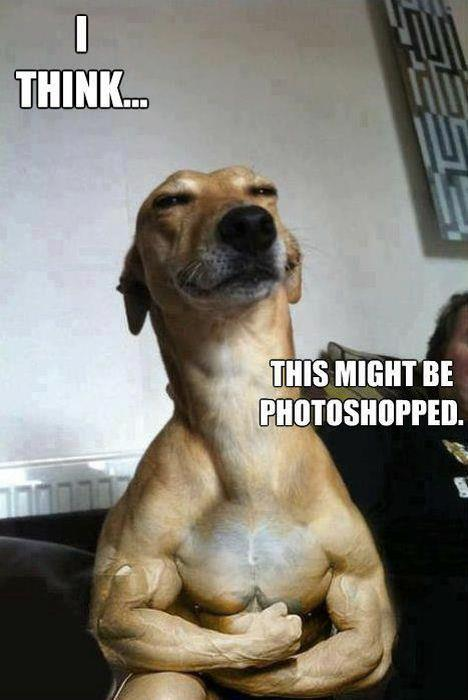 photoshop dog animal funny pic picture meme lol