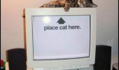 funny pic picture lol cat lolcat animal computer pc